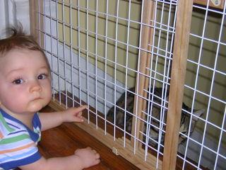 Catprison